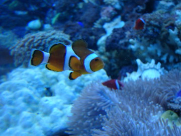 MyParisNet.com ? Aquarium Sealife - Paris - Val d?Europe